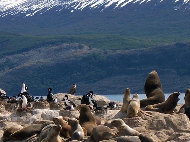 Pinguinos y lobos marinos