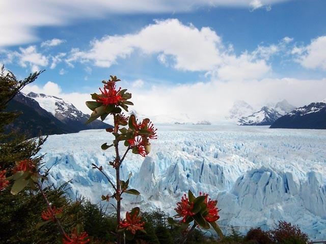 Vista panoramica del glaciar