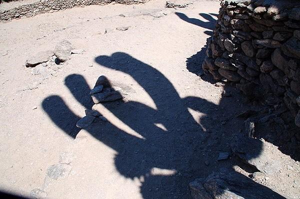 Sombra de los Cactus