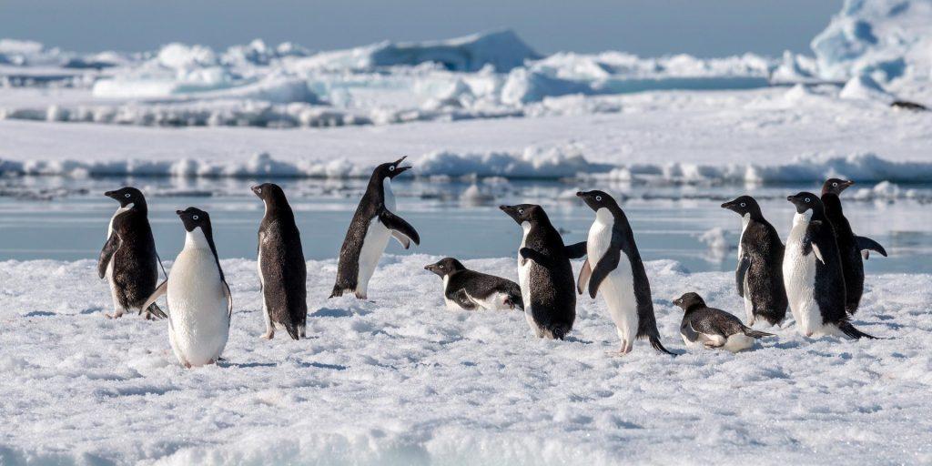 Kreuzfahrt in die Antarktis (Hurtigruten)