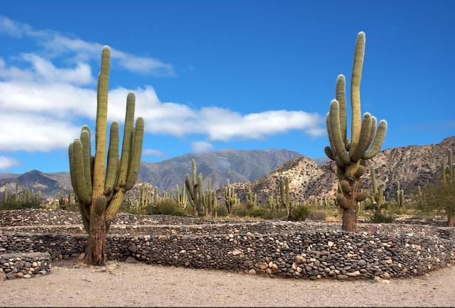 Cactus en las Ruinas de Quilmes