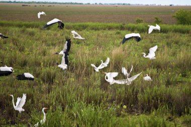 Esteros del Ibera Corrientes