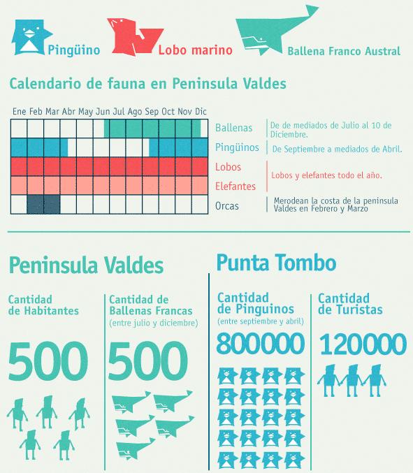 Calendario ballenas Puerto Madryn